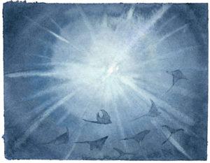 Catherine Atkinson - Dancing Rays