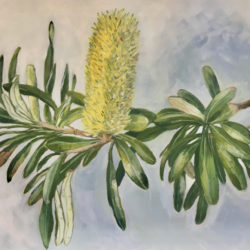 Dianne Bradley - Banksia on Branch