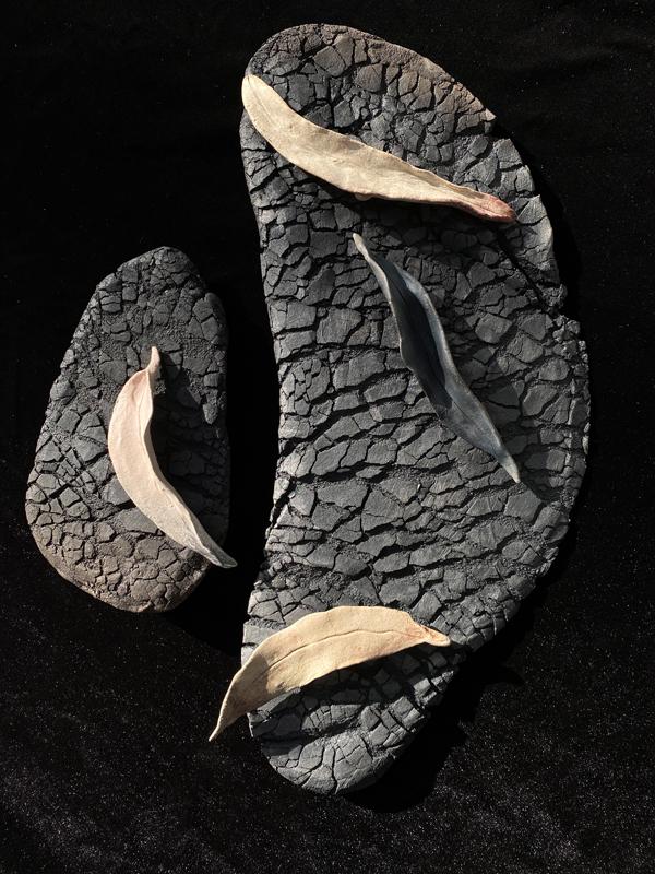 Sol Contardo - Gum leaves on Burnt Bark